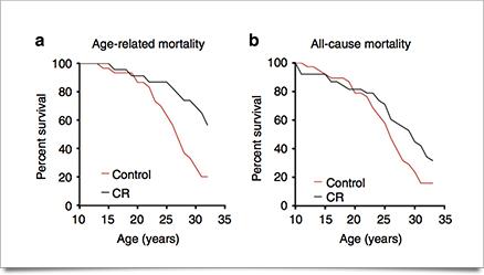 Low calorie diet for long life