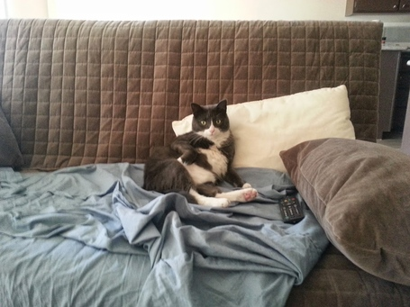 Cat_couch_medium