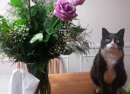 Cat_flowers_medium
