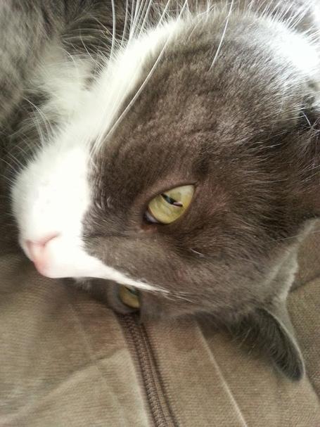 Cat_face_2_medium