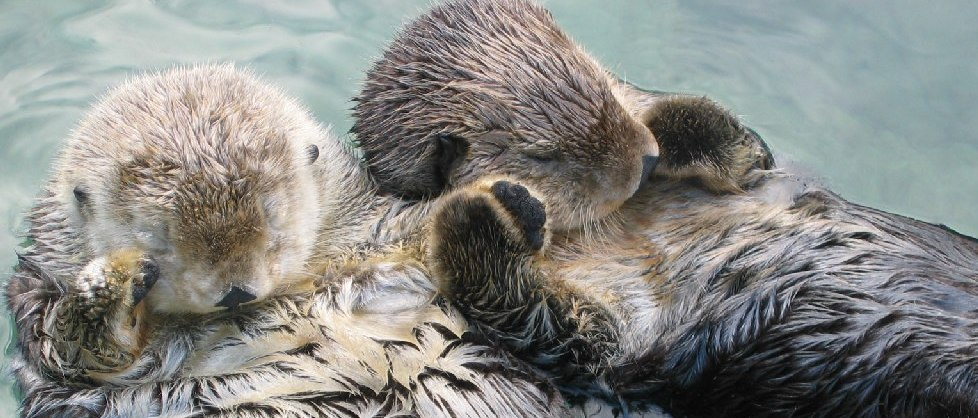 Otters_holding_hands