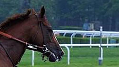 Horse-3_medium