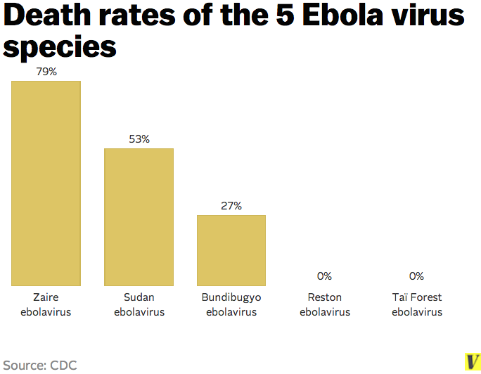 the discovery of the ebola virus in early nineties Ebola causes viral hemorrhagic fever and kills up to 90% of people who  of  ebola's five subtypes, the zaire strain -- the first to be identified  of uganda  where the virus was discovered in 2007 -- sudan and zaire sub-types.