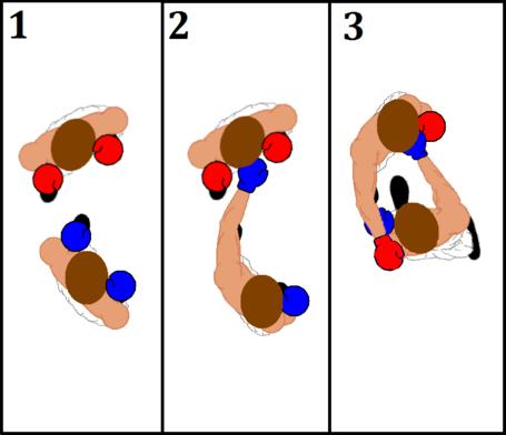 Brown_combo_diagram_medium