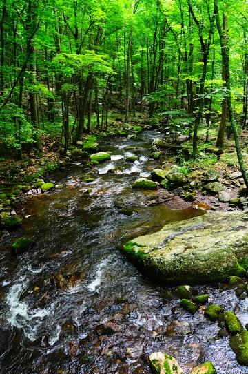Little_stony_creek_medium