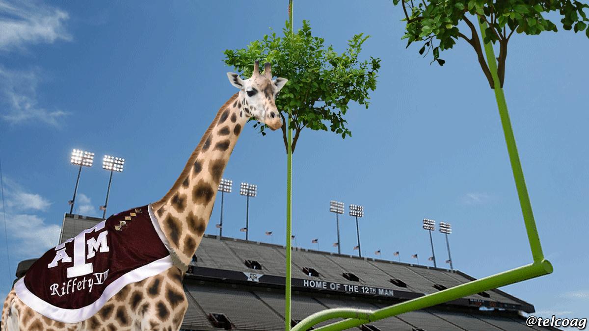Riffety-kyle-field-giraffe