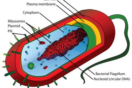 cell image wikimedia