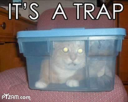 Cat_plastic_container_trap