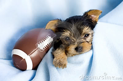 Puppy-with-football