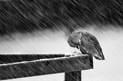 Bird-bird-rain-cold-poor-bird-snow-favim.com-318706