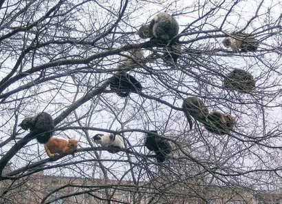 Tree_full_of_cats