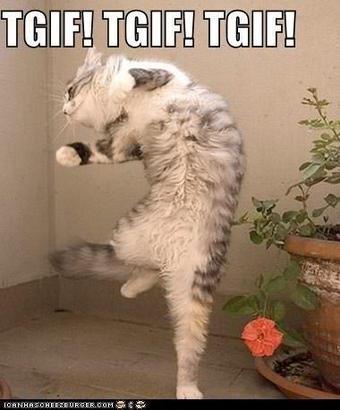 Tgif-cat1