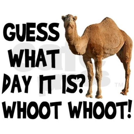 45972-hump-day-camel_medium