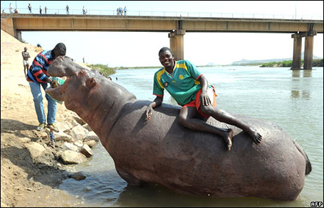 _45228752_01cameroon_hippoafp_medium