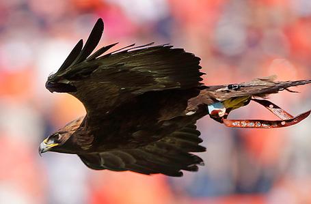 Tiger-war-eagle_medium