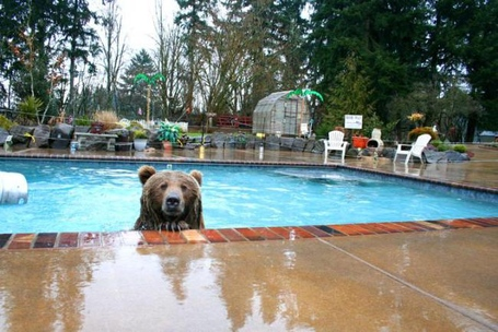 Bearbrutus-caseyanderson-pool_medium