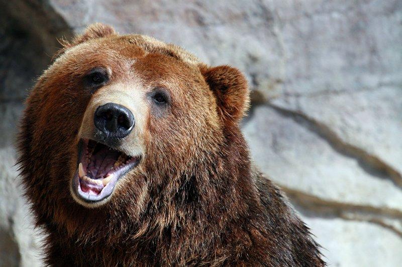 Картинки про медведей смешные