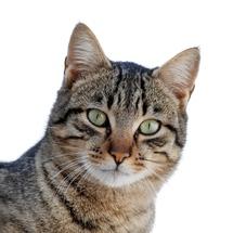 Cat_march_2010-1a_1_