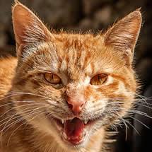 Wild-kitty
