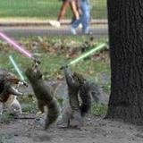 Jedi_squirrels