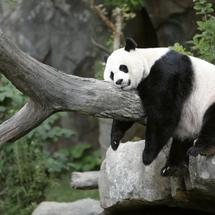2012-09-17t130533z_01_tor901_rtridsp_3_usa-panda-washington-218