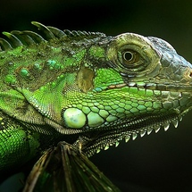 Green_animals_4x