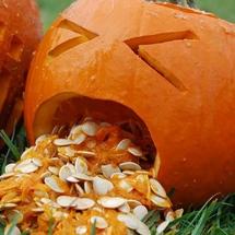 Pumpkin-sq600