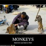 Funny-pictures-never-turn-your-back-on-monkeys