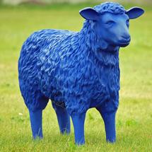 Blue_sheep_03