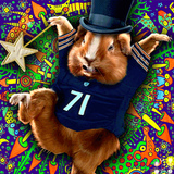 Bear_hamster