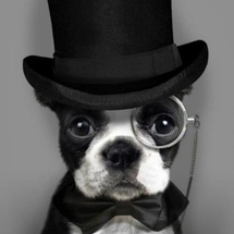 L-dapper-dog