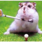 Hamstergolfhd4