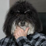 Pensivedog
