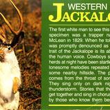 Jackalope_card