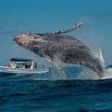 62_whale_in_awesome_mid-jump