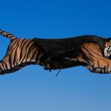 Bengal-tiger-vest