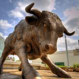 Bullrunner33
