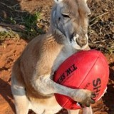 Kangaroo_football