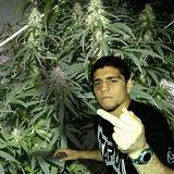 Nick-diaz-weed_0