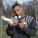 Tyson_pigeon