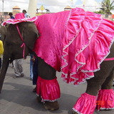 Elephant_pink_clothes