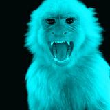 Angry_monkey