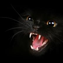 Fierce_cat_wallpaper__yvt2