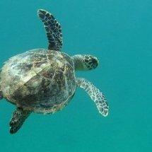 My_turtle