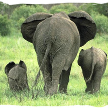 Elephant-family-satour-addoelephantnationalpark