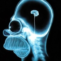 Homers_brain