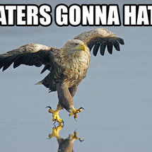 Haters-gonna-hate-eagle