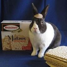 Bunny_answer_3_xlarge