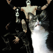 Metal_kitty