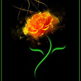 Orange_rose_by_chaooss